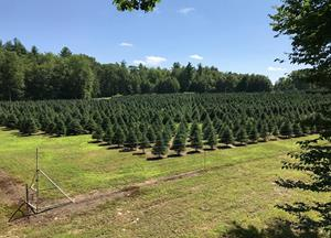 Highland Plantation 2018