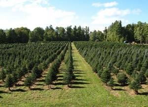Highland Plantation Christmas Tree Farm