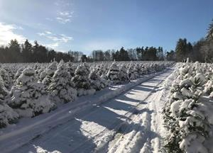 Photos from Highland Plantation Christmas Tree Farm